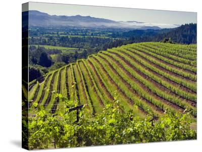 Newton Vineyard, Napa Valley, California, Usa-Janis Miglavs-Stretched Canvas Print