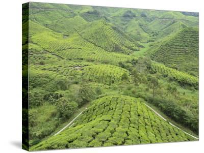 Tea Plantation, Cameron Highlands, Perak, Malaysia, Southeast Asia, Asia-Jochen Schlenker-Stretched Canvas Print