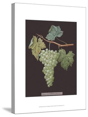 White Grapes-George Brookshaw-Stretched Canvas Print