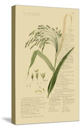 Ornamental Grasses V-A^ Descubes-Stretched Canvas Print