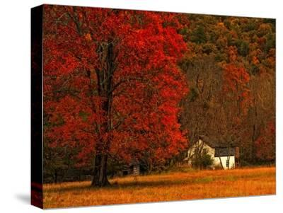 Farm House on a Autumn Morn'-Danny Head-Stretched Canvas Print