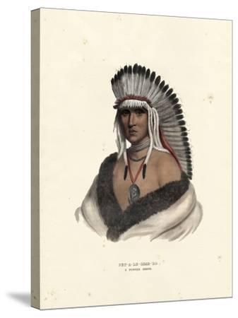 Pawnee Brave-McKenney & Hall-Stretched Canvas Print