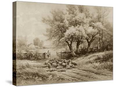 Herding Sheep-Carl Weber-Stretched Canvas Print