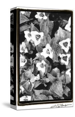 Springtime Garden I-Laura Denardo-Stretched Canvas Print