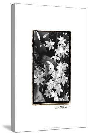 Springtime Garden VII-Laura Denardo-Stretched Canvas Print