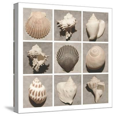Weathered Shell Sampler-Renee W^ Stramel-Stretched Canvas Print