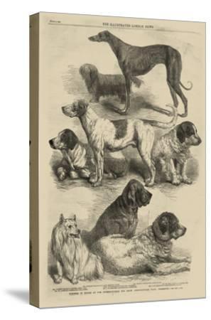 International Dog Show I--Stretched Canvas Print