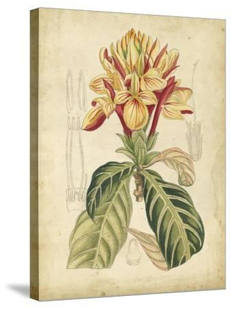 Curtis Tropical Blooms IV-Samuel Curtis-Stretched Canvas Print