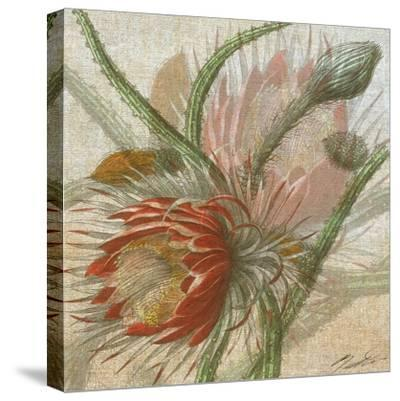 Desert Botanicals II-John Butler-Stretched Canvas Print