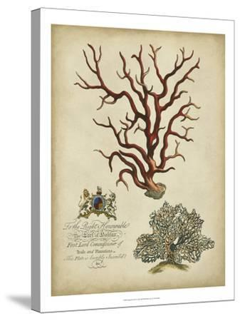 Imperial Coral IV--Stretched Canvas Print
