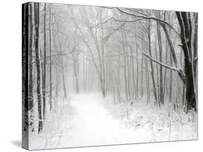 Trees Line a Snow-Covered Road Through a Forest-Amy & Al White & Petteway-Stretched Canvas Print