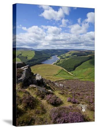 Derwent Edge, Ladybower Reservoir, and Purple Heather Moorland in Foreground, Peak District Nationa-Neale Clark-Stretched Canvas Print