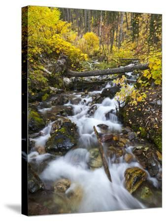Hellroaring Creek Decked Out in Autumn Color Near Whitefish, Montana, Usa-Chuck Haney-Stretched Canvas Print