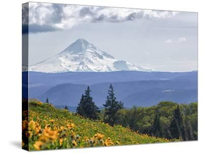 Mt. Hood from Mccall Point, Tom Mccall Nature Preserve, Columbia Gorge, Oregon, Usa-Rick A^ Brown-Stretched Canvas Print