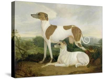 Two Greyhounds in a Landscape-Charles Hancock-Stretched Canvas Print