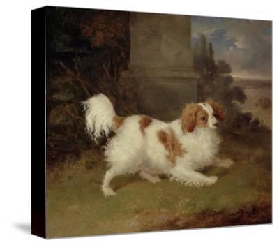 A Blenheim Spaniel, c.1820-30-William Webb-Stretched Canvas Print