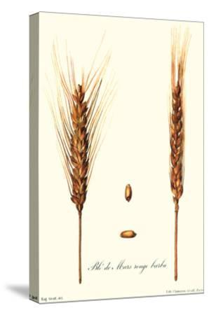 Wheat-Philippe-Victoire Leveque de Vilmorin-Stretched Canvas Print