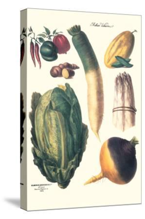 Vegetables; White Asparagus, Spago, Peppers, Cabbage, Turnip-Philippe-Victoire Leveque de Vilmorin-Stretched Canvas Print