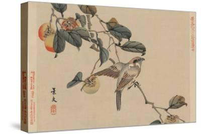 Bird Perched on a Branch from a Fruit Persimmon Tree.-Keibun Matsumura-Stretched Canvas Print