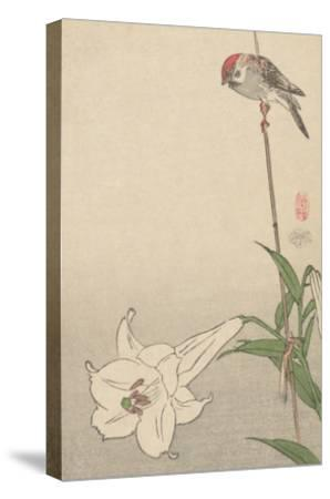 Small Bird on Lily Plant.-Baison-Stretched Canvas Print