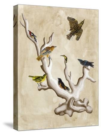 The Ornithologist's Dream III-Naomi McCavitt-Stretched Canvas Print