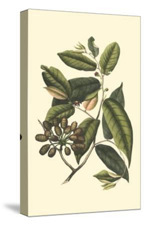 Flourishing Foliage III-Vision Studio-Stretched Canvas Print