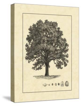Vintage Tree I--Stretched Canvas Print