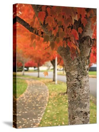 Fall Colors, Keizer, Oregon, USA-Rick A^ Brown-Stretched Canvas Print