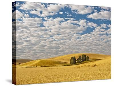 Dawn Breaks on Wheat Field, Walla Walla, Washington, USA-Richard Duval-Stretched Canvas Print
