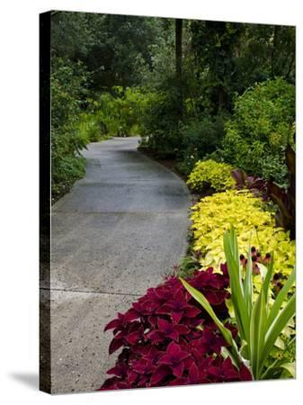 Harry P. Leu Gardens, Orlando, Florida, United States of America, North America-Michael DeFreitas-Stretched Canvas Print