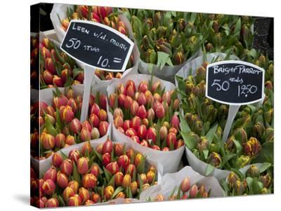 Tulips, Bloemenmarkt, Amsterdam, Holland, Europe-Frank Fell-Stretched Canvas Print