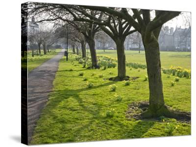 Daffodils on the Stray, Harrogate, North Yorkshire, England-Mark Sunderland-Stretched Canvas Print
