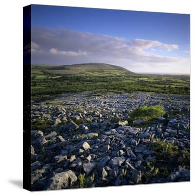 Limestone Pavement, the Burren, County Clare, Munster, Republic of Ireland, Europe-Stuart Black-Stretched Canvas Print