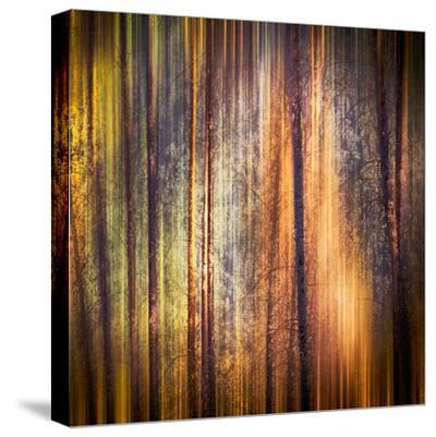 Autumn Walk-Ursula Abresch-Stretched Canvas Print