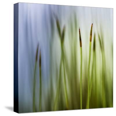 Moss-Ursula Abresch-Stretched Canvas Print