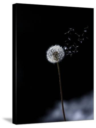 Just a Wind Blow-Marco Carmassi-Stretched Canvas Print