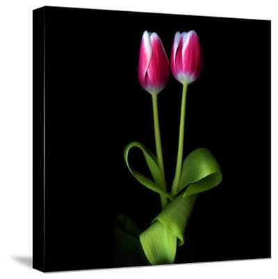Duotone Tulips-Magda Indigo-Stretched Canvas Print