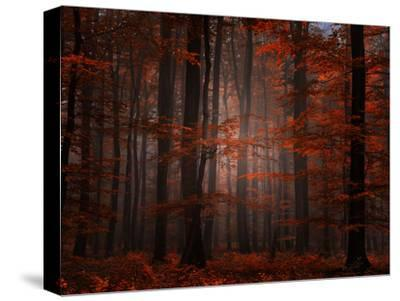 Spiritual Wood-Philippe Sainte-Laudy-Stretched Canvas Print