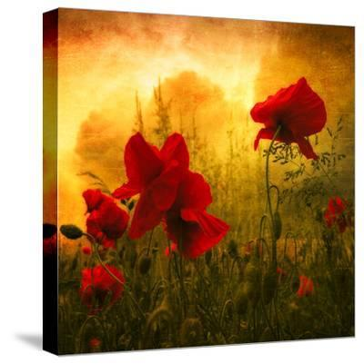 Red for Love-Philippe Sainte-Laudy-Stretched Canvas Print