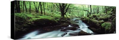Waterfall in a Forest, Golitha Falls, River Fowey, Cornwall, England--Stretched Canvas Print