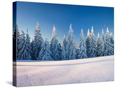 Snow Covered Trees on a Landscape, Belchen Mountain, Black Forest, Baden-Wurttemberg, Germany--Stretched Canvas Print