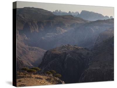 Dragon's Blood Trees Grow in Scattered Groves-Michael Melford-Stretched Canvas Print
