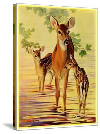 """""""Doe and Fawns,""""April 29, 1933-Jack Murray-Stretched Canvas Print"""