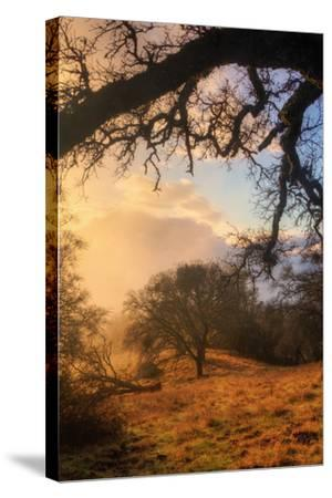 Light and the Back Woods-Vincent James-Stretched Canvas Print