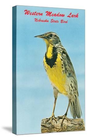 Western Meadowlark--Stretched Canvas Print