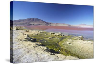 Laguna Colorada on the Altiplano, Potosi Department, Bolivia, South America-Ian Trower-Stretched Canvas Print