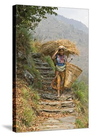 Local Woman Follows a Trail Carrying a Basket Called a Doko, Annapurna, Nepal-David Noyes-Stretched Canvas Print