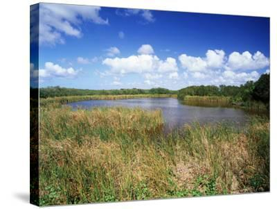 View of Eco Pond, Everglades National Park, Florida, USA-Adam Jones-Stretched Canvas Print