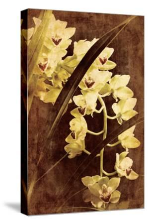 Orchid-Thea Schrack-Stretched Canvas Print