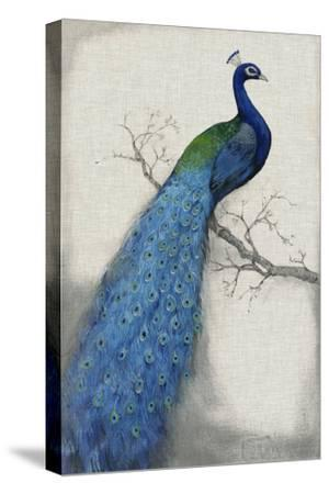 Peacock Blue I-Tim O'toole-Stretched Canvas Print